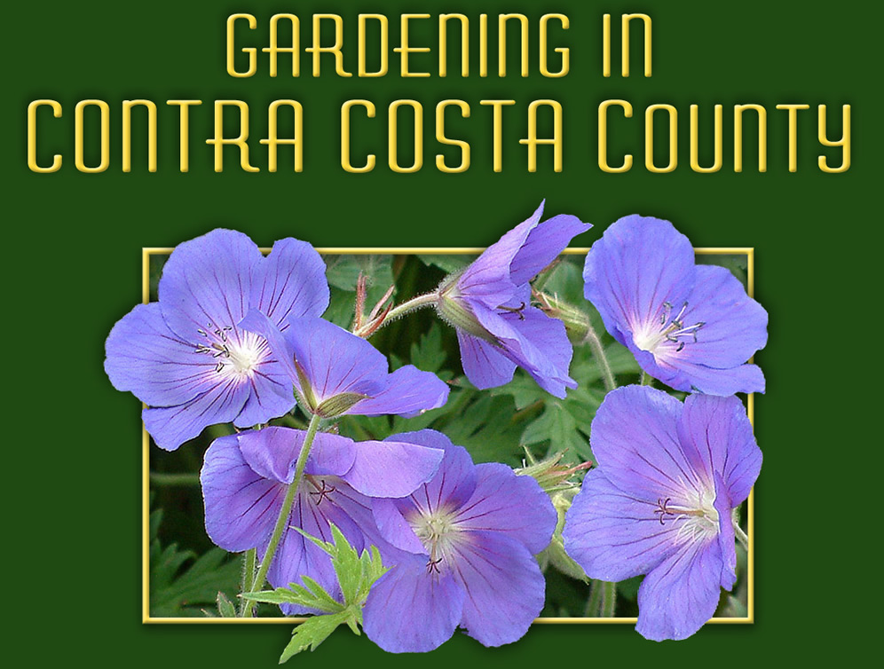 Water Wise Gardening In Contra Costa County